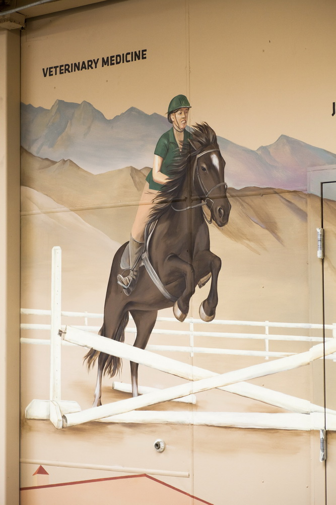 Equine_Sciences_Mural_Colorado_State_University_ Fort_Collins_Yulia_Avgustinovich_Denver_Muralist (24)
